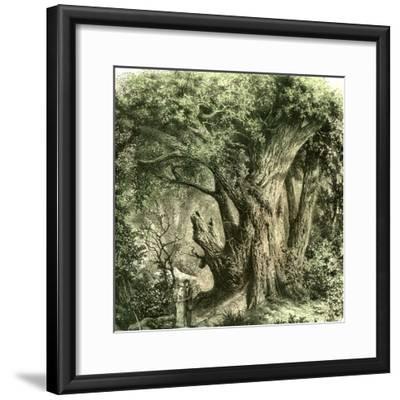 Woods Uk 19th Century--Framed Giclee Print