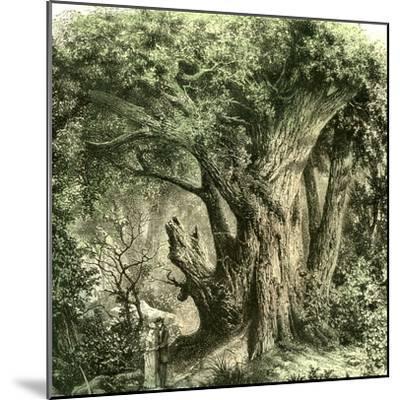 Woods Uk 19th Century--Mounted Giclee Print
