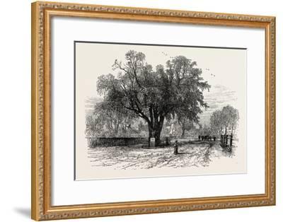 Washington Elm, Cambridge, Massachusetts, USA, 1870s--Framed Giclee Print
