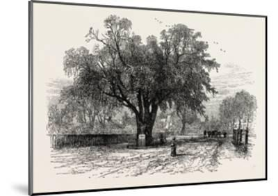 Washington Elm, Cambridge, Massachusetts, USA, 1870s--Mounted Giclee Print