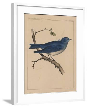 Birds, Plate XXXV, 1855--Framed Giclee Print