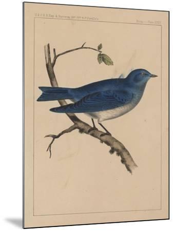 Birds, Plate XXXV, 1855--Mounted Giclee Print
