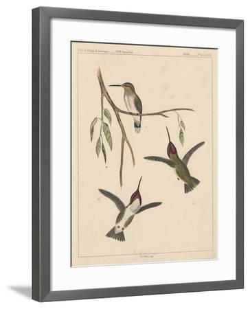 Birds, Plate XIX, 1855--Framed Giclee Print
