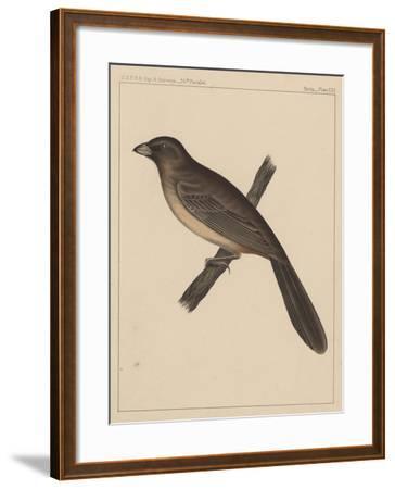 Birds, Plate XXX, 1855--Framed Giclee Print