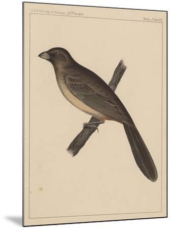 Birds, Plate XXX, 1855--Mounted Giclee Print