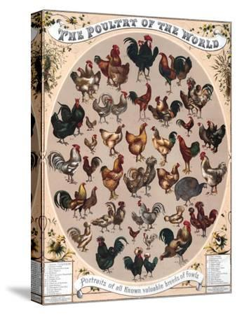 Poultry of the World Poster, 1868--Stretched Canvas Print