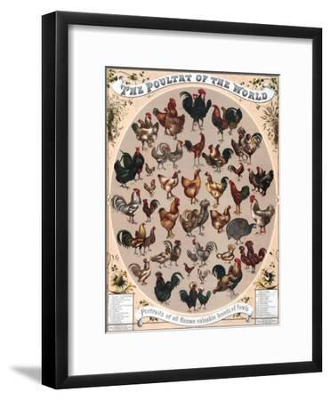 Poultry of the World Poster, 1868--Framed Giclee Print