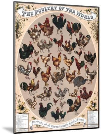 Poultry of the World Poster, 1868--Mounted Giclee Print