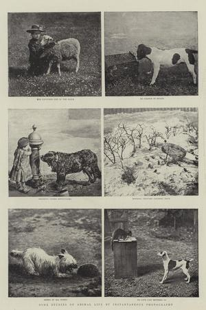 Some Studies of Animal Life by Instantaneous Photography--Stretched Canvas Print
