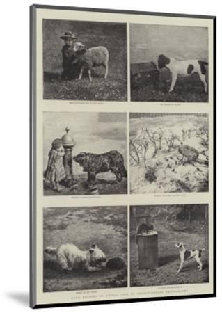 Some Studies of Animal Life by Instantaneous Photography--Mounted Giclee Print