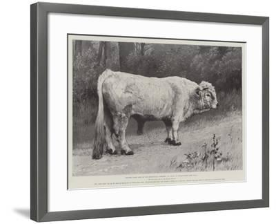 Studies from Life at the Zoological Gardens, a Chillingham Park Bull--Framed Giclee Print