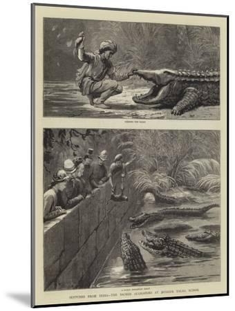 Sketches from India, the Sacred Alligators at Muggur Talao, Scinde--Mounted Giclee Print