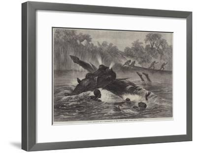 Canoe Destroyed by a Hippopotamus on the River Zambesi, South Africa--Framed Giclee Print