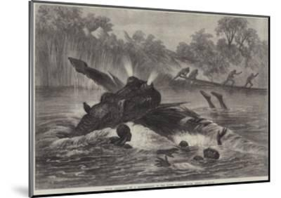 Canoe Destroyed by a Hippopotamus on the River Zambesi, South Africa--Mounted Giclee Print