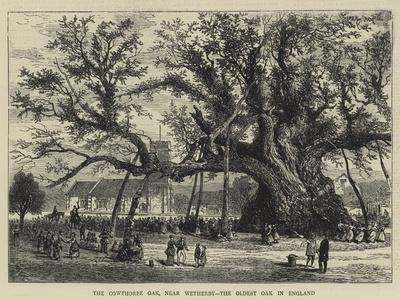 The Cowthorpe Oak, Near Wetherby, the Oldest Oak in England--Framed Giclee Print
