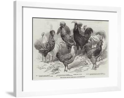 Prize Poultry, from the Winter Show, at St George'S-Road--Framed Giclee Print