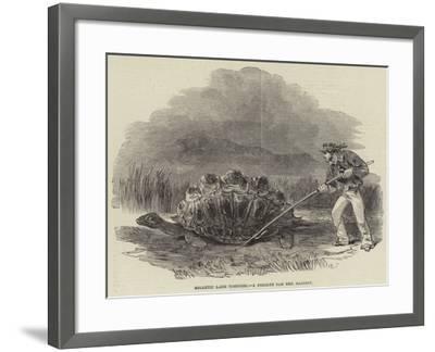 Gigantic Land Tortoise, a Present for Her Majesty--Framed Giclee Print