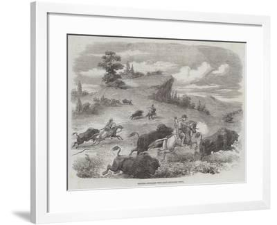 Shooting Buffaloes with Colt's Revolving Pistol--Framed Giclee Print