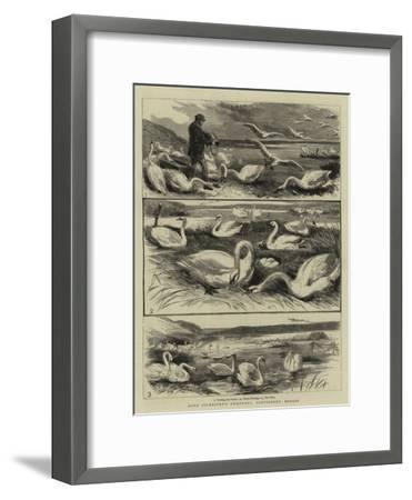 Lord Ilchester's Swannery, Abbotsbury, Dorset--Framed Giclee Print