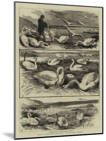 Lord Ilchester's Swannery, Abbotsbury, Dorset--Mounted Giclee Print