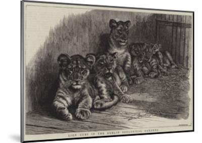 Lion Cubs in the Dublin Zoological Gardens--Mounted Giclee Print