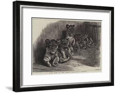 Lion Cubs in the Dublin Zoological Gardens--Framed Giclee Print