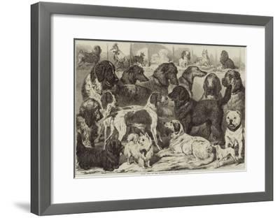 Prize Dogs at the Birmingham Dog Show--Framed Giclee Print
