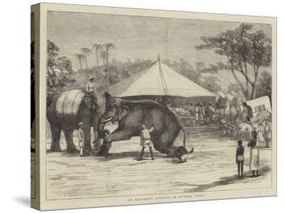 An Elephant Auction in Mysore, India--Stretched Canvas Print