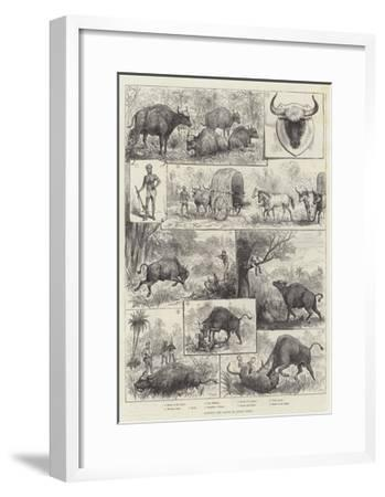 Hunting the Gaour or Indian Bison--Framed Giclee Print