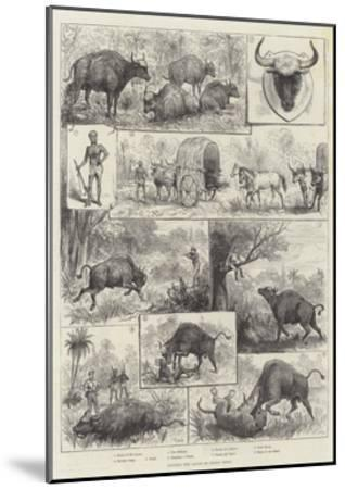 Hunting the Gaour or Indian Bison--Mounted Giclee Print