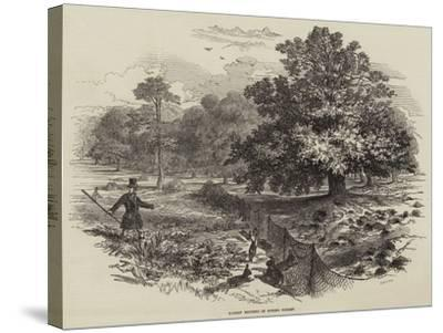 Rabbit Netting in Epping Forest--Stretched Canvas Print