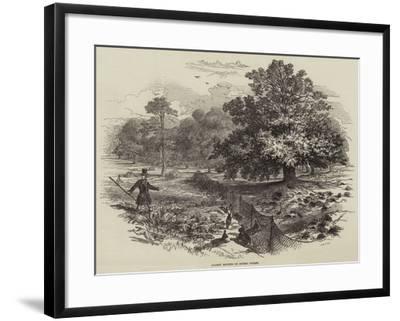 Rabbit Netting in Epping Forest--Framed Giclee Print