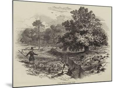 Rabbit Netting in Epping Forest--Mounted Giclee Print