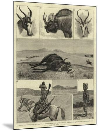 The War in the Transvaal--Mounted Giclee Print