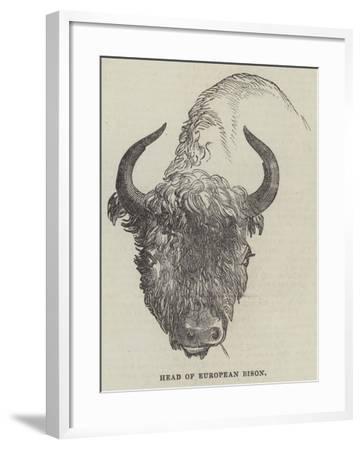 Head of European Bison--Framed Giclee Print