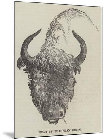 Head of European Bison--Mounted Giclee Print