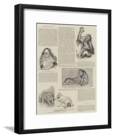 Favourites at the Zoo--Framed Giclee Print