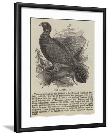 The Capercailzie--Framed Giclee Print