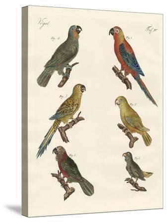 Parrots of the New World--Stretched Canvas Print