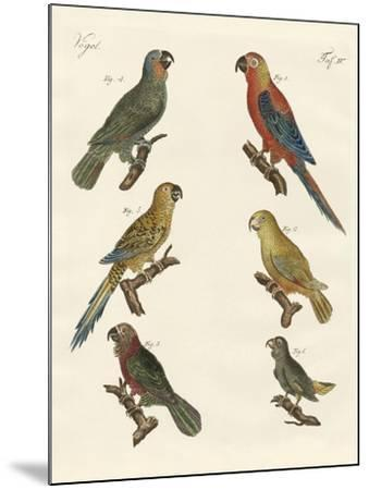 Parrots of the New World--Mounted Giclee Print