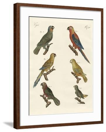 Parrots of the New World--Framed Giclee Print