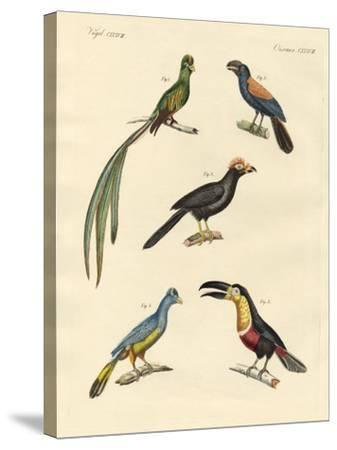 Beautiful and New Climbing Birds--Stretched Canvas Print