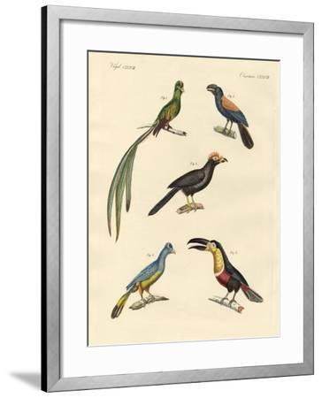 Beautiful and New Climbing Birds--Framed Giclee Print