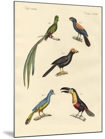 Beautiful and New Climbing Birds--Mounted Giclee Print