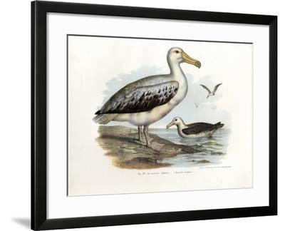 Wandering Albatross, 1864--Framed Giclee Print