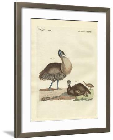 The Casuar from Australia--Framed Giclee Print