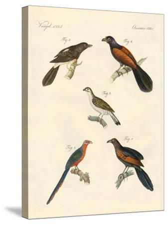 Beautiful Climbing Birds--Stretched Canvas Print