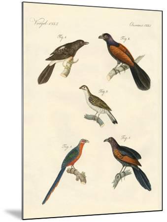 Beautiful Climbing Birds--Mounted Giclee Print