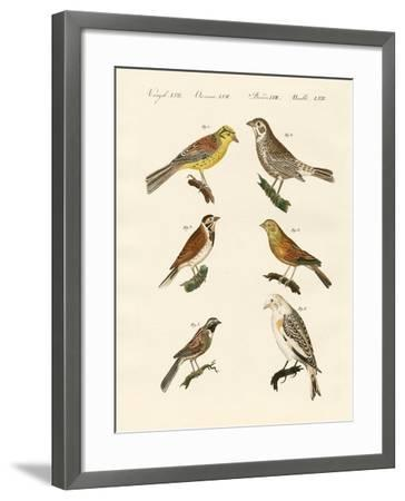 Different Kinds of Buntings--Framed Giclee Print