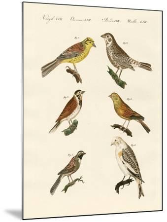 Different Kinds of Buntings--Mounted Giclee Print